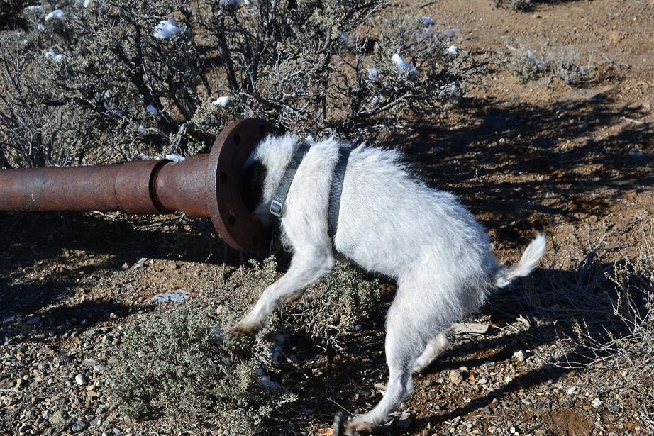 Is there a mouse in this pipe?  Betsy checks it out.  11-11-12