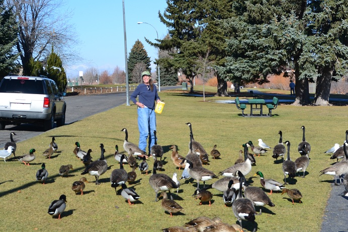 LuLu fed a bunch of ducks and geese outside our Motel room in Idaho Falls.  11-15-12